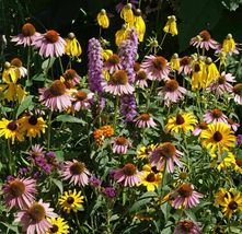 SHIP FROM US 900,000 Midwest Wildflower Mix Seeds -Heirloom-, ZG09 - $158.36