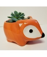 "Echeveria Elegans Succulent Ceramic Pot Live Plant 5"" Orange Flora Fox P... - $14.99"