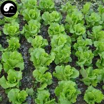 Buy Leaf Lactuca Vegetable Seeds 1200pcs Plant Green Salad Vegetables Le... - $15.99