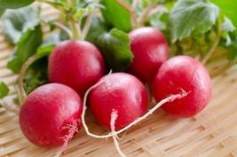 Champion Radish Seeds | NON-GMO | Fresh Garden 200 Seeds - $10.99