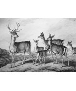 AESOP FABLES Stag & Fawn - 1811 Original Etching Print - $21.60
