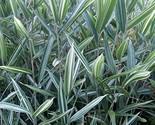 61bguhrv 2bel. sl1500  thumb155 crop