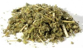 Horehound Cut 2oz (Marrubium vulgare) - $10.84