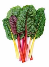 Swiss Chard Rainbow Mix Non GMO Heirloom Vegetable Seeds Sow No GMO® USA - $2.66+