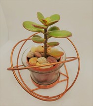 "Baby Jade Succulent in Rose Gold Planter, Crassula Plant, Metal Glass Pot, 4"" image 4"