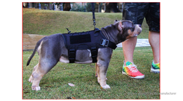 Outdoor Tactical Training for Dog Waterproof Molle Harness Vest - $36.90+
