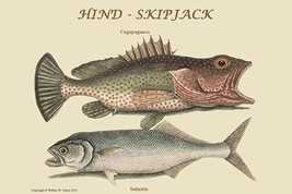 Hind & Skipjack by Catesby Catesby - Art Print - $19.99+
