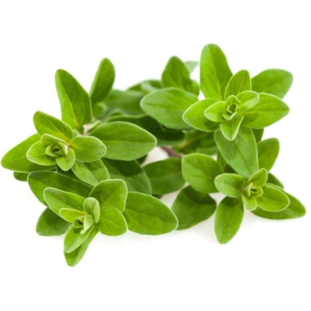 Primary image for SHIP From US, 1 gram 2800 Seeds Sweet Marjoram Herb, DIY Herb Seeds ZJ01