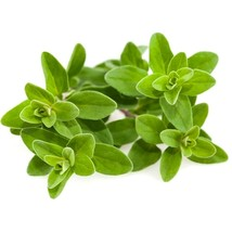 SHIP From US, 1 gram 2800 Seeds Sweet Marjoram Herb, DIY Herb Seeds ZJ01 - $24.60