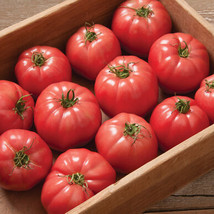 Pink Wonder Tomato Seed, Vegetable Seeds,Ship From US - $19.00