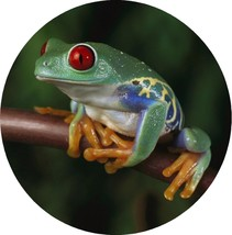 Tree Frog Toad Amphibian Drink Coasters Polyester Top Rubber Bottom Seto... - $13.30