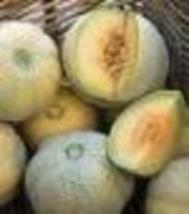 Cantalope - Minnesota Midget - Non-Hybrid - Non-GMO - St. Clare Heirloom... - $1.99