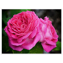 Rose Oil Painting Wall Art Poster - $14.36+