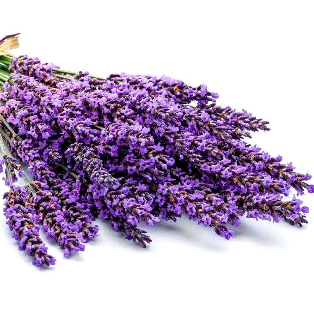 Primary image for SHIP From US, 1 gram 900 Seeds Lavender Vera English Herb, DIY Herb Seeds ZJ01