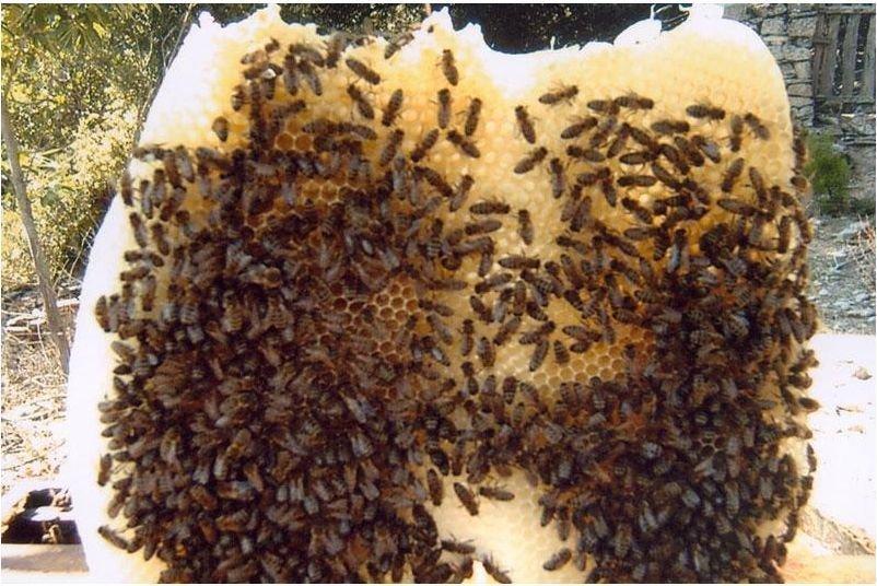 Thyme & Flowers Raw Honey unrefined Jar 500gr-17.63oz handmade from Crete Island