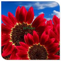 Helianthus Red Sunflower Seed, Red Sun Fortune Bloom, Garden Heirloom Se... - $4.00