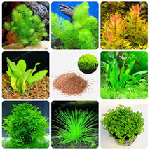 200 Pcs New Aquarium Grass Seeds (Mix) Water Aquatic Plant Seeds - $4.76