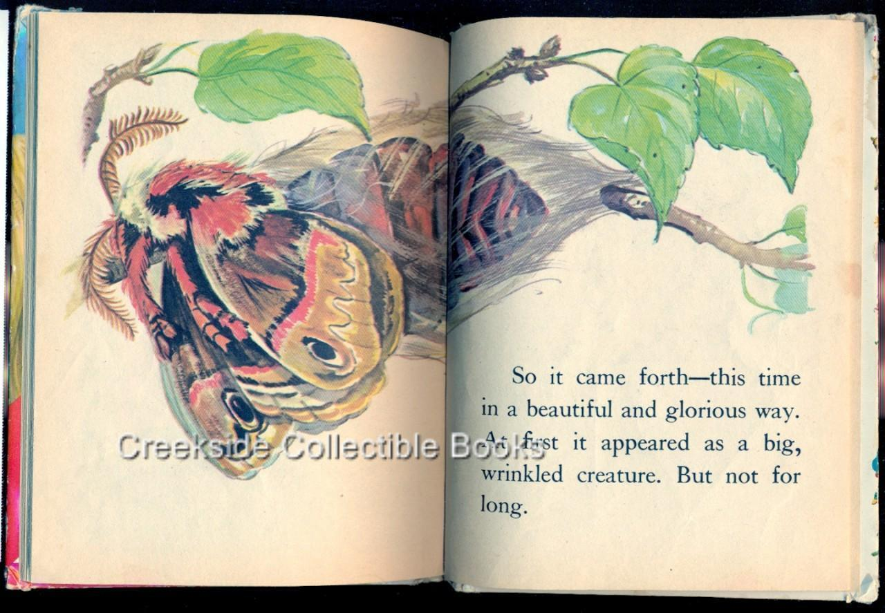 """Start-Right Elf Book """"A Moth is Born"""" 1967"""