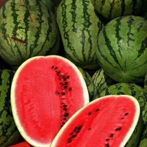 SHIP FROM US 1 Ounce Seeds Allsweet Watermelon,DIY Fruit Seeds RM - $15.78