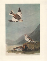 VINTAGE JOHN JAMES AUDUBON BIRD PRINT ~ SNOW BUNTING - $79.96