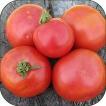30 Akansas Traveler Tomato Seeds 2019 ( Non-Gmo Free Shipping! ) - $5.12