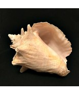Queen Conch Sea Shell White Natural Vintage Beach Seashell large 10 x 6 ... - $55.44