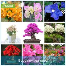 20 PCS Colourful Bougainvillea Spectabilis Willd Perennial Bonsai Plant ... - $2.16