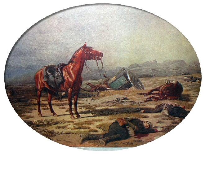 Horse morrow 06