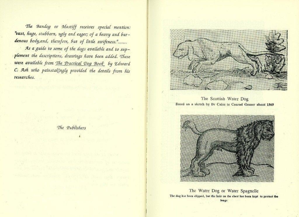 """Résultat de recherche d'images pour """"johannes caius"""""""