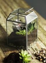 Small Desktop Terrarium - $29.99