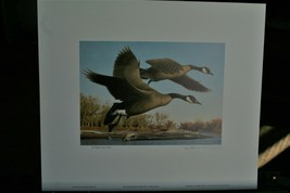 1990 First of State Colorado Duck Stamp & Print   >By Larry Hayden LIt, ... - $54.45