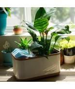 |New| Dewplanter - The Water Generating Planter - $48.00