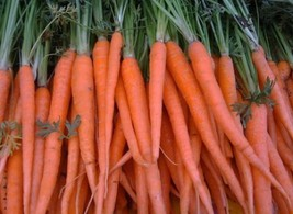 SHIPPED From US, 200 FRESH CARROT TENDERSWEET SEEDS*FREE SHIPPING-SPM - $16.99