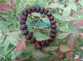 Free Shipping - Tibetan Buddhism Natural Red Bodhi Seeds Meditation Prayer Beads - $20.00