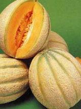 "BEST PRICE Hales Best ""Jumbo"" Melon, AM DIY Home Garden Fruits 25 Seeds - $23.99"
