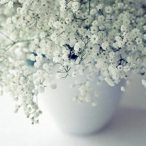 Primary image for SHIP FROM USA Babys Breath Flower Seeds (Gypsophila Elegans) 400+Seeds UDS