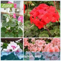20pcs Rare Geranium Seed Flower Seeds Bonsai Plants For Home Garden Bea... - $2.18