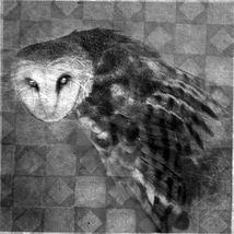 OmQuanta Money Spell Bohemian Grove Illuminati Order OfThe Owl Betweenal... - $125.00
