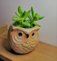 """Golden Sedum Succulent in Ceramic Owl Planter, Live Plant, 2.5"""" Animal Pot"""
