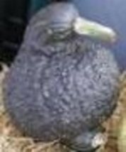 Winter Squash - Hubbard Chicago Warted - Non-Hybrid - St. Clare Heirloom Seeds - $1.99