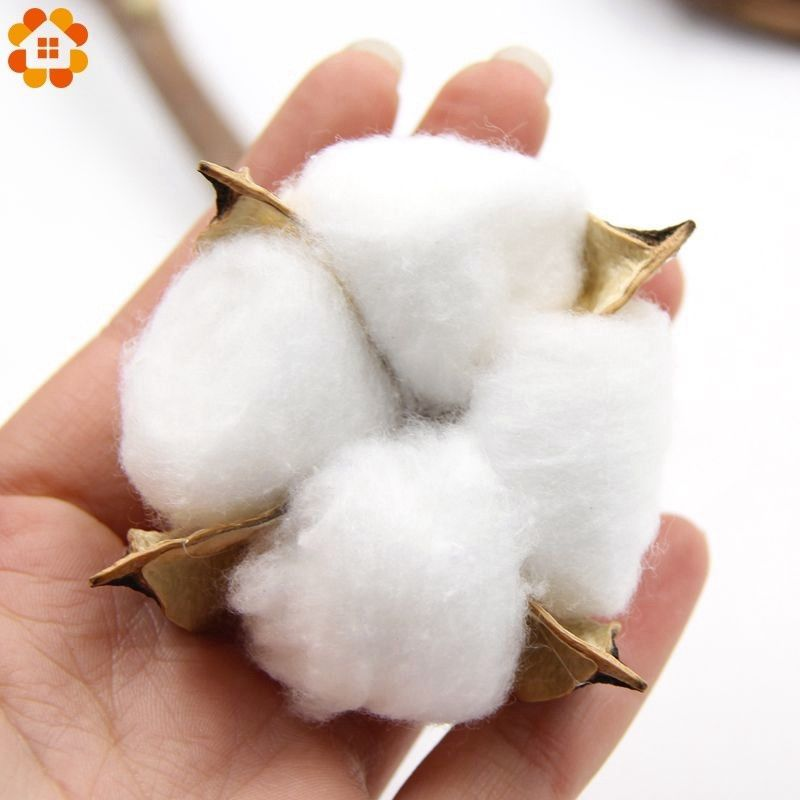 DIYHouse® 5PC/Set Colorful Natural Dried Cotton Flower Heads DIY Crafts Dried