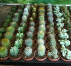 6 Assorted Potted Cactus/Succulents...Real Live Plants!!! FREE SHIPPING - $14.84