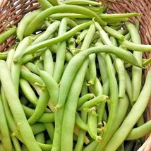 SHIPPED FROM US 80+BLACK VALENTINE BUSH BEANS Seed , CB08 - $16.50