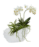 Succulent and Mini Phalaenopsis in Shell Ceramic - $64.75