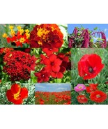 SHIP FROM US 144,000 Radiant Red Wildflower Mix, ZG09 - $111.16