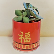 """Jade Plant in Red Gold Tin, 3"""" Planter Succulent Crassula ovata Chinese New Year image 2"""