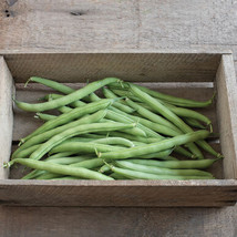 Provider Organic Bean Seed ,Vegetable Seeds, 175 Seeds,  Ship From US - $15.00