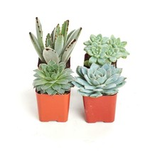 2 In. Blue/Green Collection Succulent (Collection Of 4) - $35.79