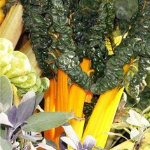 30 Seeds Yellow stick beet Seeds Beta vulgaris Delicious Vegetable Seeds C155 - $13.58