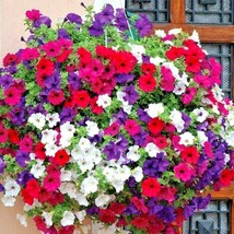 8000+DWARF PETUNIA MIX Flower Seeds Garden/Containers Hanging Baskets Wi... - $5.50
